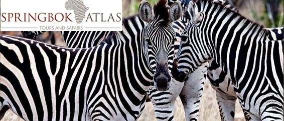 Springbok Atlas débarque sur DMCMag.com