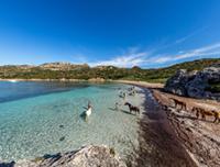 Bonifacio - Chevaux à Paragan - © Robert Palomba