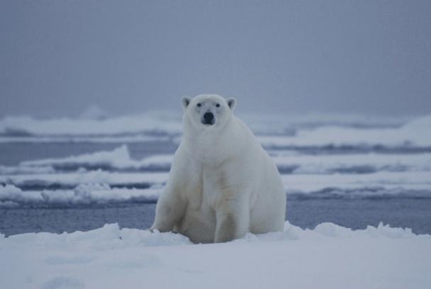 Une croisière expédition est un produit touristique bien précis, surtout en zone arctique - Photo F. Weill