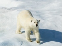Hurtigruten : webinaire le 25 mars sur le Spitzberg