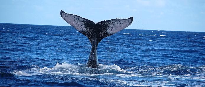 © milletours / Safari baleines pendant l'hiver austral