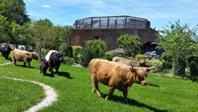 Vache Ecolodge © Diverti'Parc
