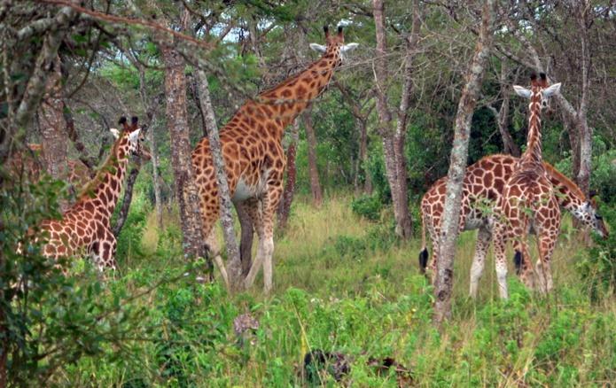 Pour admirer la diversité de la faune et de la flore du parc, il est préférable de démarrer à l'aube ou au crépuscule... /crédit CM