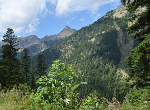 Les gîtes et cabanes perchées du Boréon sont situés à 1 600m d'altitude et conçus pour accueillir 4 personnes maximum - DR