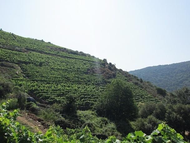 Les collines de Ribeira Sacra, bel endroit pour un séjour autour de l'oenotourisme - DR : LAC