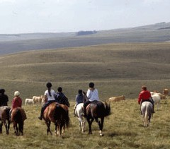 Tourisme Equestre : la ''Filière Cheval'' en Lozère