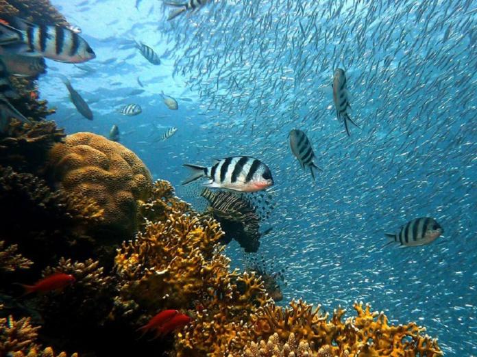 """Selon les experts de l'UICN """"l'humanité a atteint un point de bascule. La « réussite » économique ne saurait plus se faire aux dépens de la nature"""" - DR : Le Congrès mondial de la nature"""