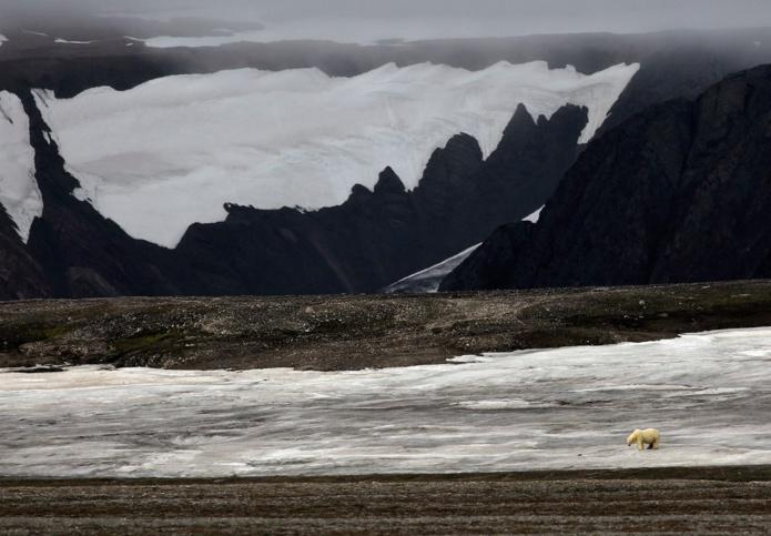 Rencontre avec le seigneur de l'Arctique, le 14 août 2021 à bord du Polarfront au Svalbard - DR : Vincent Lecomte, Grands Espaces