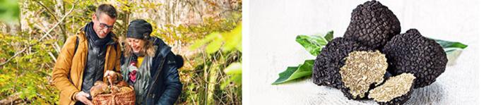 Sortie aux champignons © my destination / Truffes © shutterstock / BFC Tourisme
