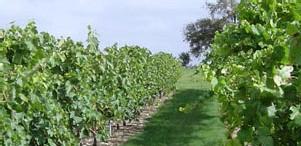 Charente-Maritime : le Cep Enchanté, un parc à thème dédié à la vigne