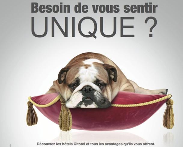 Pour marquer les esprits, Citotel a lancé une campagne de communication décalée, dont la mascotte est un chien. DR