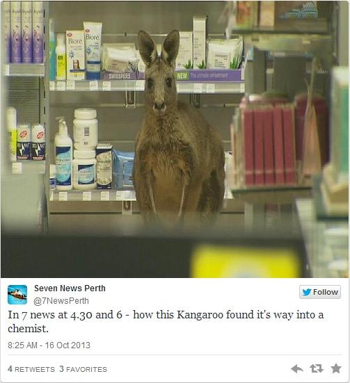 De nombreuses photos du kangourou réfugié à l'aéroport de Melbourne ont été publiées sur Twitter - DR Twitter