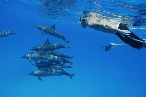 Cocorico Voyages lance un incentive pour les agents de voyages