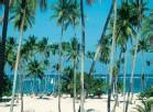 Vacances Transat : offres spéciales agents de voyage