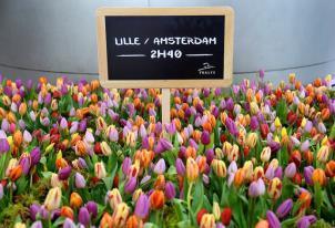 Pour accueillir les 200 premiers voyageurs en provenance d'Amsterdam, la gare de Lille-Europe était décorée de centaines de tulipes. DR