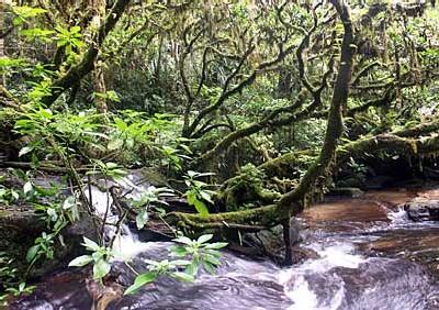 Rainforests of the Atsinanana Madagascar - © UNESCO/Rhett Butler