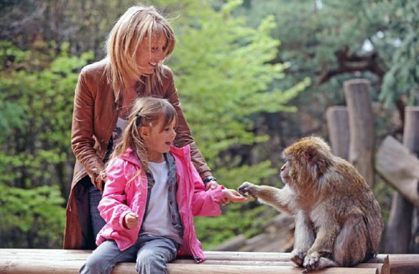 La Montagne des Singes conforte sa place de 4e site touristique d'Alsace en 2014 - DR : La Montagne des Singes