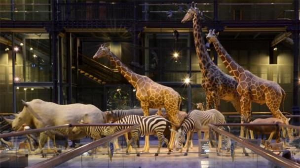 Grande Galerie de l'Évolution © M.N.H.N - Catherine Ficaja