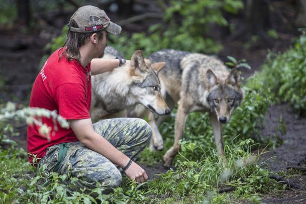 Le refuge accueille les animaux sauvages, blessés ou maltraités dans une optique de réhabilitation - DR : Collection du refuge Pageau