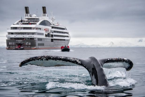 Le Boréal, qui va fêter ses cinq ans, lors d'une croisière en Antarctique, où Le Ponant rafle 50% de parts de marché. DR - Lorraine Turci Ponant