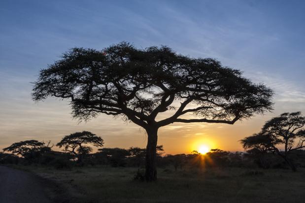 De cette immense plaine du Serengeti, un territoire de quelque 15000km² au cratère du Ngorongoro, un zoo prodigieux dans lequel l'homme est derrière les barreaux de la cage tandis que les animaux le contemplent d'une manière indifférente © Thomas Sztanek - Fotolia.com
