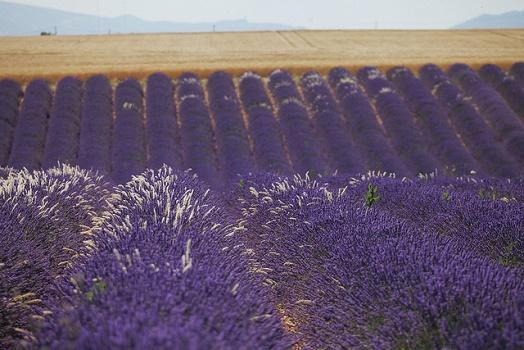 La Provence signe son Contrat de Destination - Photo ©P.Carrese Flickr