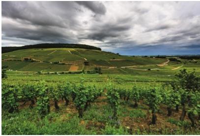 La colline de Corton, en Bourgogne - Photo : Michel Joly
