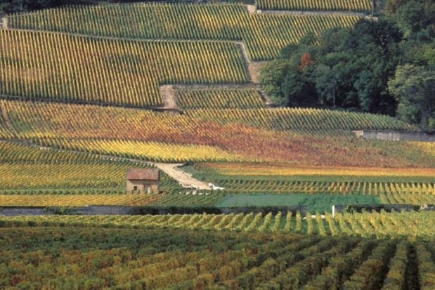 © Jean-Louis Bernuy/Mosaic of the Climats – Climats, terroirs of Burgundy (France)