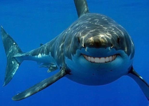 Cette pratique de s'autoportrayer, selon nos confrères de l'Express, est plus mortelle que les attaques de requins !Photo DR
