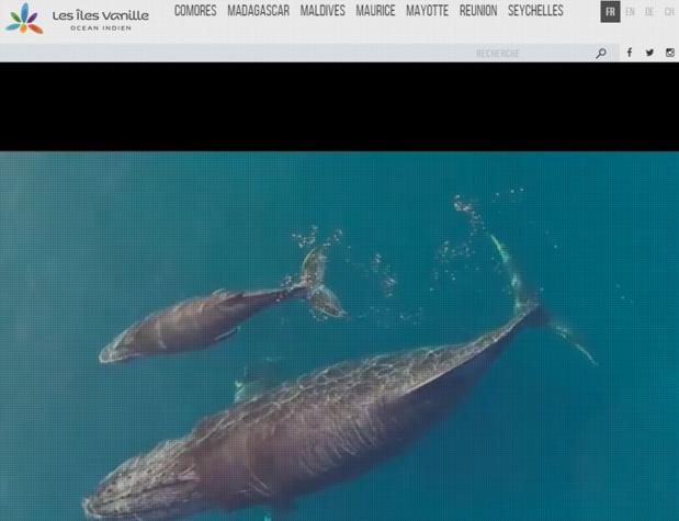 Les Îles de Vanille se mobilisent pour préserver leur fonds de commerce - Capture d'écran