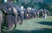 La trêve au Sri Lanka ''booste'' le tourisme