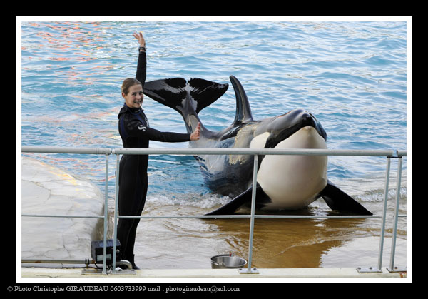 Marineland will offer more educative shows. Photo : Christophe Giraudeau