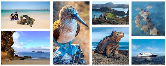 Avec la reprise d'Ocean Adventures, Celebrity Cruises développe ses activités dans les îles Galapagos - Photos : Celebrity Cruises
