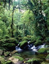 Monteverde Reserve - Photo Visit Costa Rica