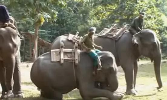 Les éléphants du Mékong Eléphant Camp - DR
