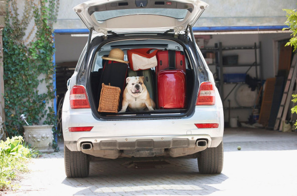Les Français pourront-ils partir avec leur animal de compagnie cet été ? - Photo : Holidog.com