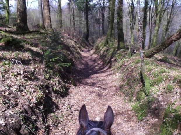 Une balade équestre pour apprécier un paysage qui ondule joliment en courbes émeraude, piquées de bois sombres et de hameaux de vallons - DR : Association Cheval Nature du Sud Manche
