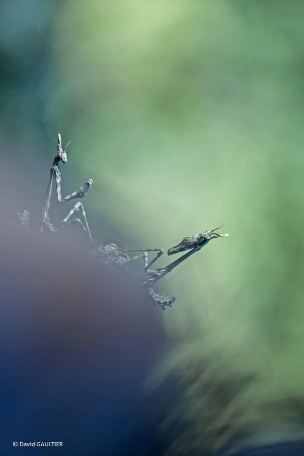 Haute-Marne : 20ème édition du festival de la photo animalière et de nature