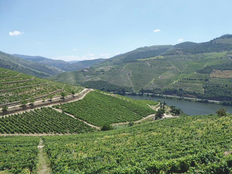 Vallée du Douro © DR
