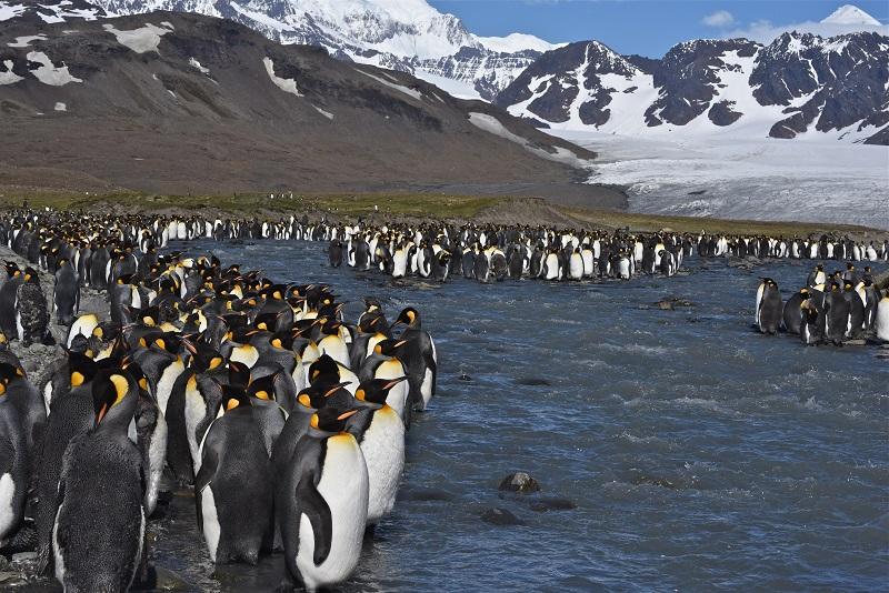 Le spectacle est saisissant, la beauté des lieux d'abord, l'abondance de la faune ensuite - DR : C. Pérot