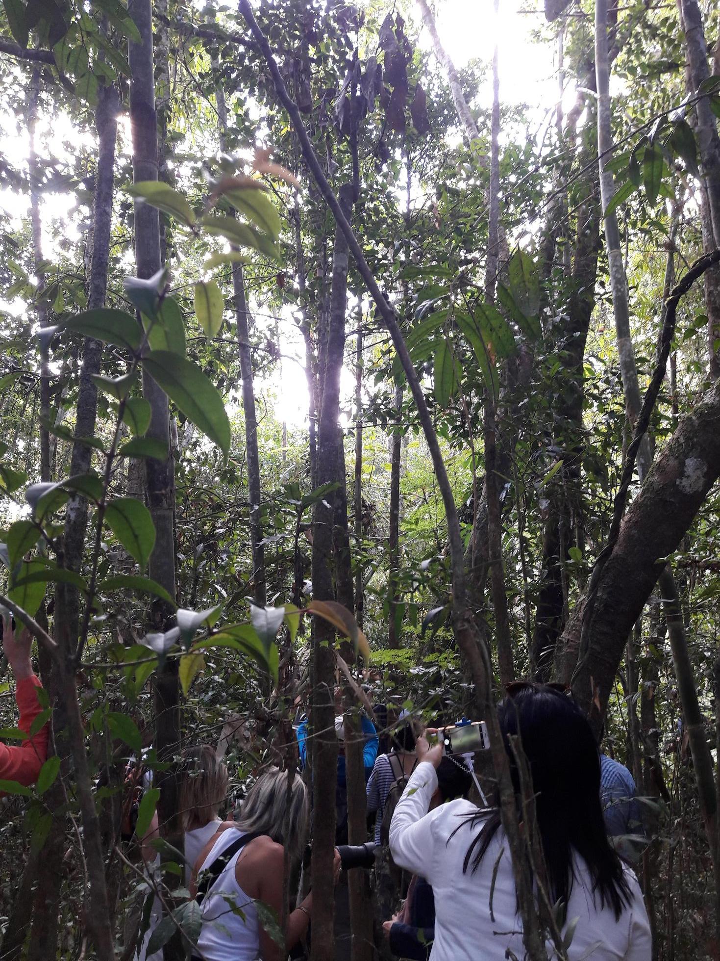 Safari photo dans la forêt primaire d'Andasibe. Les lémuriens jouent à cache cache - Photo : M.S.