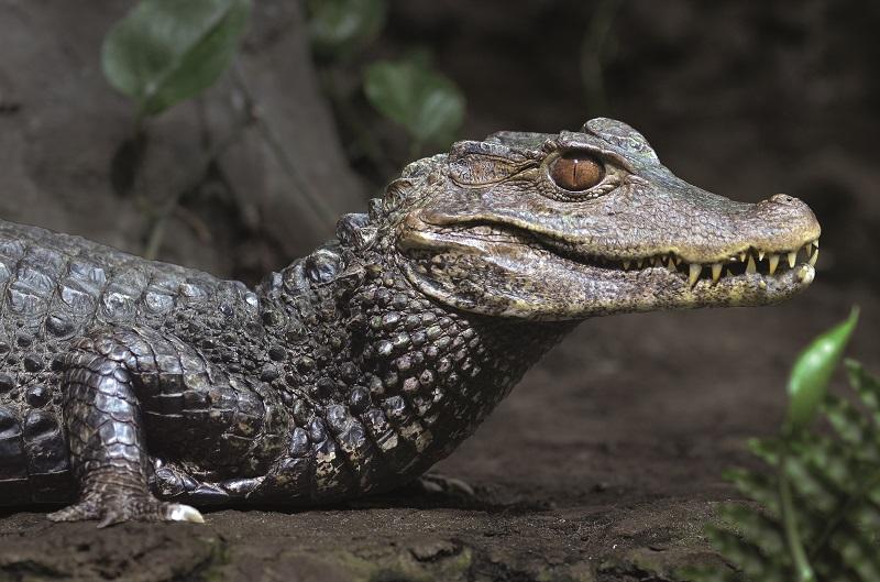 © Ferme aux Crocodiles
