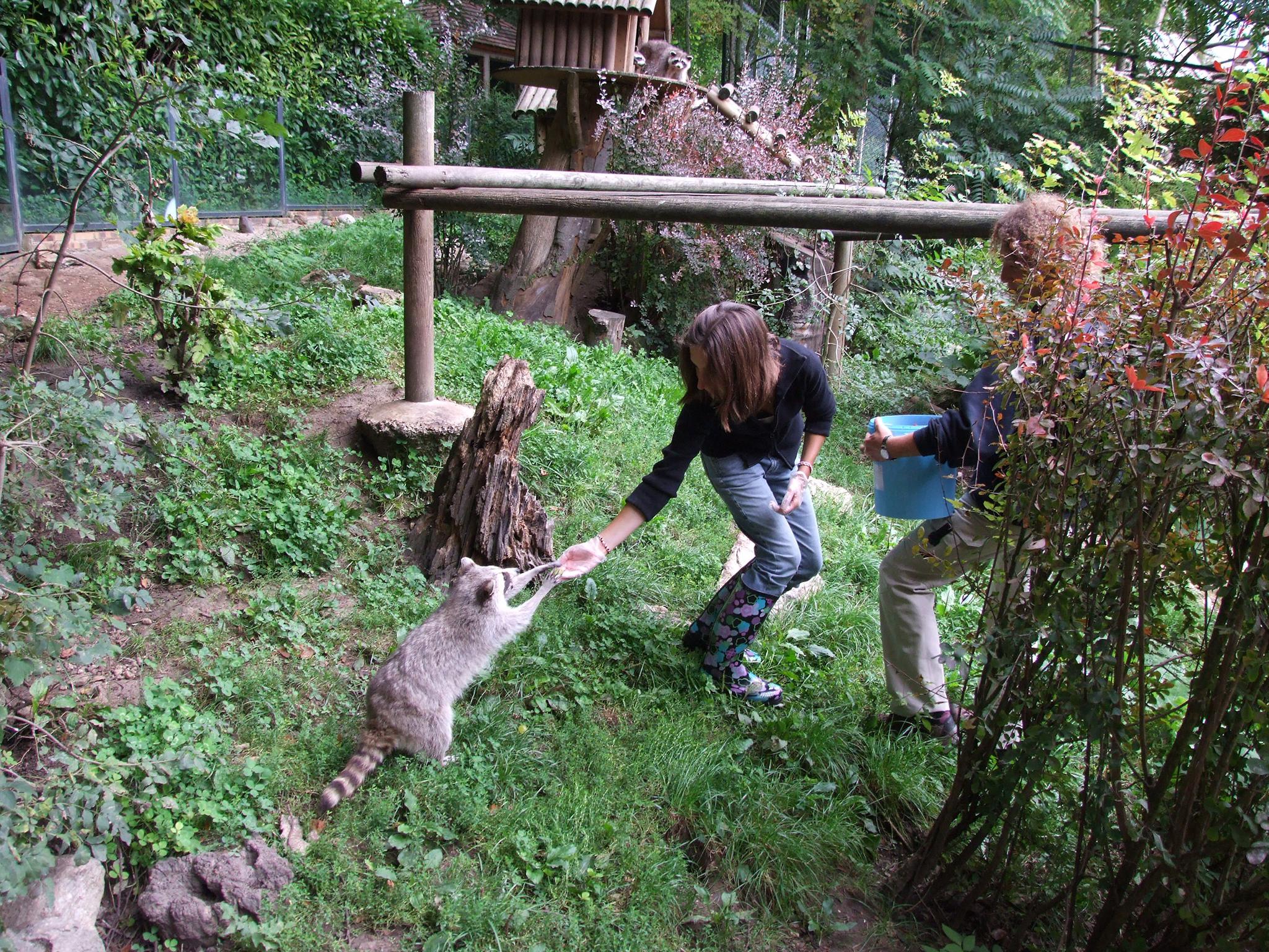 Aux juniors comme aux seniors, le parc donne à ses visiteurs la possibilité de devenir « soigneur d'un jour » . C'est la découverte des pensionnaires au plus près avec les soigneurs et préparation des repas des animaux (avec supplément) - DR : ZP Beauval