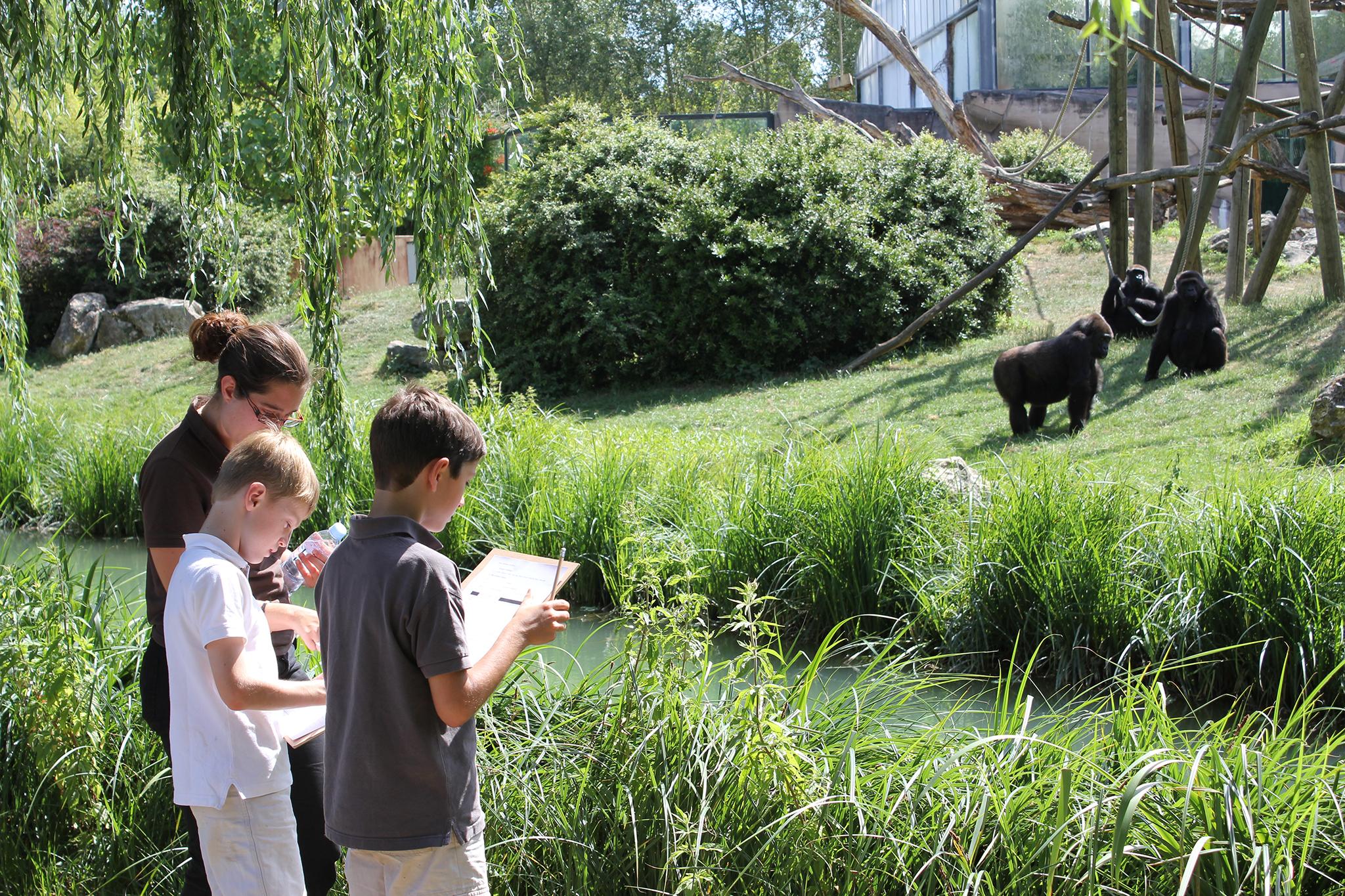 En 2016, 11 000 enfants ont suivi les ateliers pédagogiques du ZooParc - DR : ZP Beauval