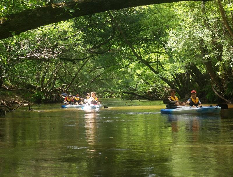 La Leyre se faufile sur près de 100 km, réunion de deux rivières nées dans les marais. Le cours d'eau glisse ensuite jusqu'au bassin d'Arcachon - DR : J.-F.R.