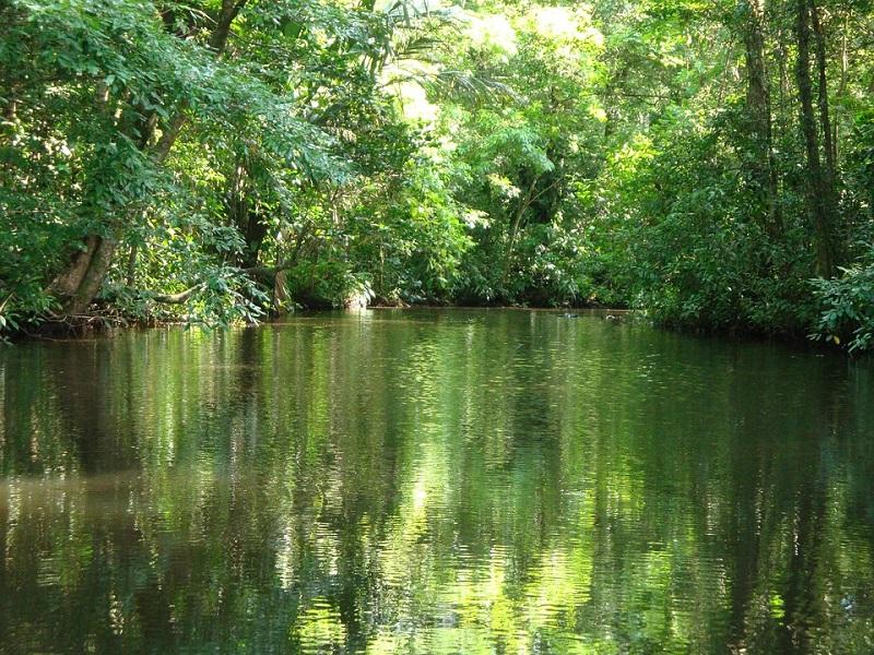 """Le parc national de Tortuguero au Costa Rica est situé dans la """"Humedal Caribe Noreste"""", zone humide protégée au niveau international - DR creative commons, rsasse63"""