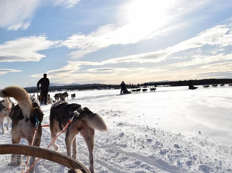 Nortours propose des séjours en Laponie finlandaise, norvégienne et suédoise - DR Pixabay