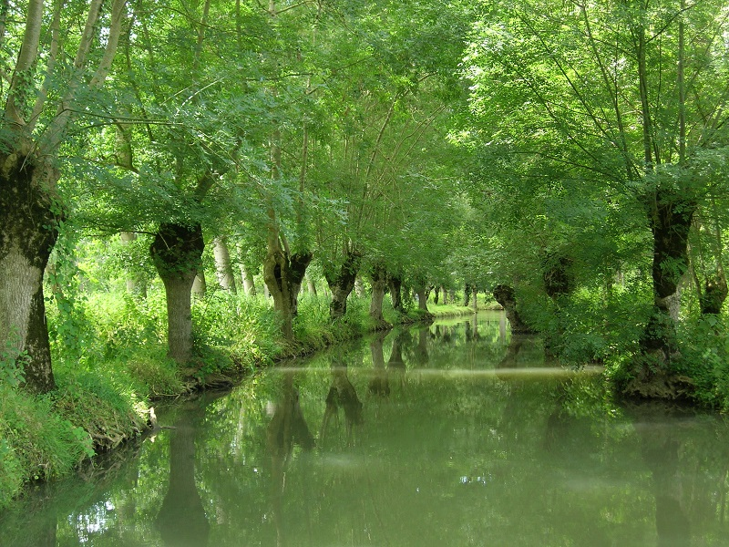 Le Parc Naturel Régional œuvre pour la sauvegarde, la restauration et la valorisation du territoire. Photo: PNR Marais poitevin