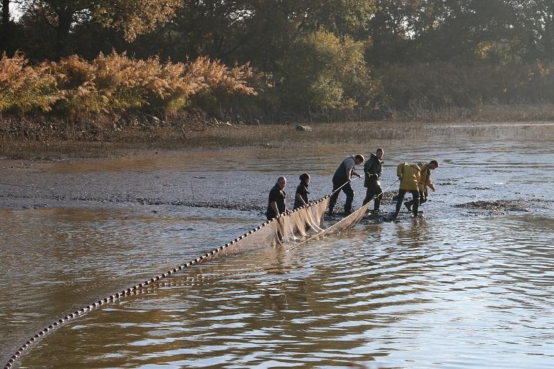 Équipé d'une combinaison néoprène imperméable, un petit groupe d'hommes et de femmes se met à l'eau et déroule en arc de cercle un tramail (filet) - DR : J.-F. R.