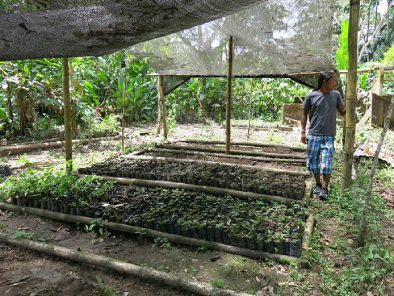 Pépinière Ishpingo en Equateur © Fondation GoodPlanet